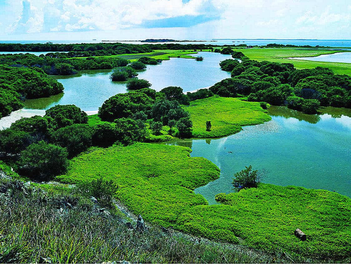 Esteros de Camaguan - Estado Guárico