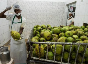 produccion coco