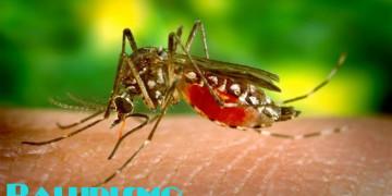 Paludismo - Notilogía